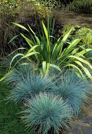 Festuca glauca 'Elijah Blue' and Phormium
