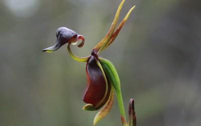 Orquideas singulares II