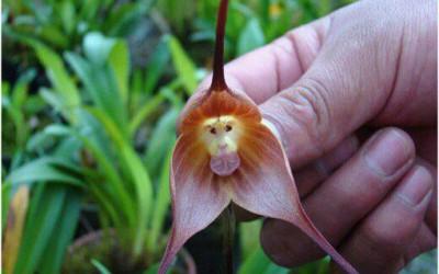 Orquideas singulares